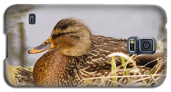 Galaxy S5 Case featuring the photograph Afternoon Siesta by Jordan Blackstone