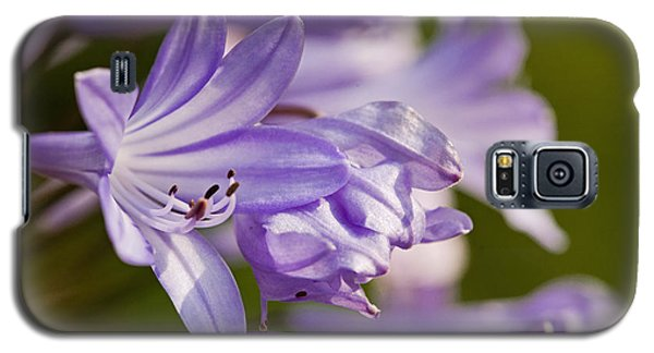 Galaxy S5 Case featuring the photograph Agapanthus by Liz  Alderdice