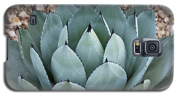 Galaxy S5 Case featuring the photograph Agave by Lana Enderle