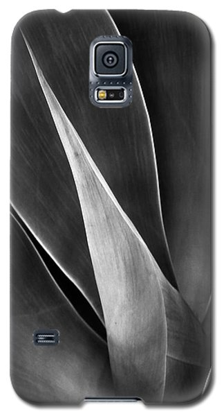 Agave No 3 Galaxy S5 Case by Ben and Raisa Gertsberg