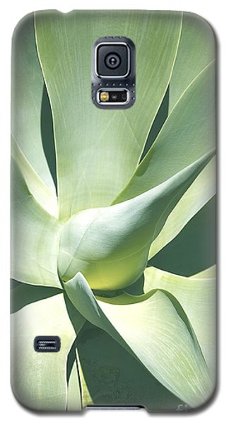 Agave Plant 1 Galaxy S5 Case