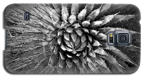 Agave Spikes Black And White Galaxy S5 Case by Alan Socolik