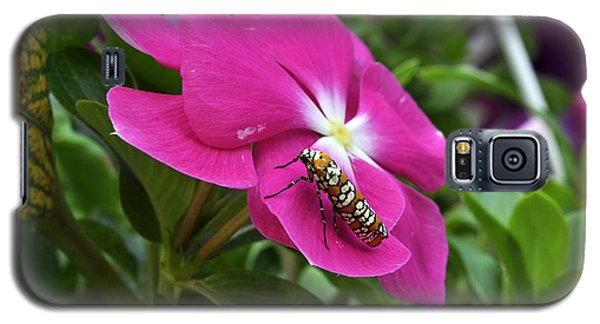 Galaxy S5 Case featuring the photograph Ailanthus Webworm Moth Visiting My Garden by Verana Stark