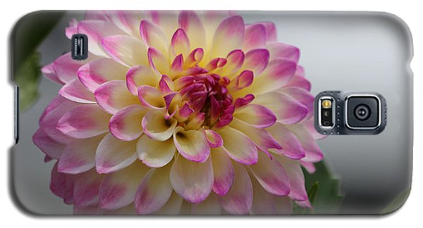 Galaxy S5 Case featuring the photograph Ala Mode by Jeanette C Landstrom