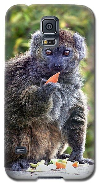 Alaotran Gentle Lemur Galaxy S5 Case by Terri Waters