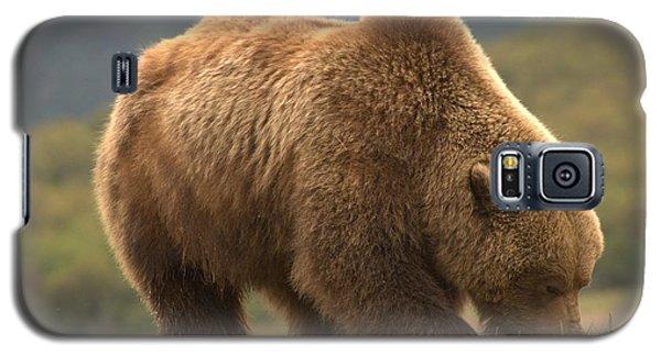 Alaska Kodiak Bear Galaxy S5 Case