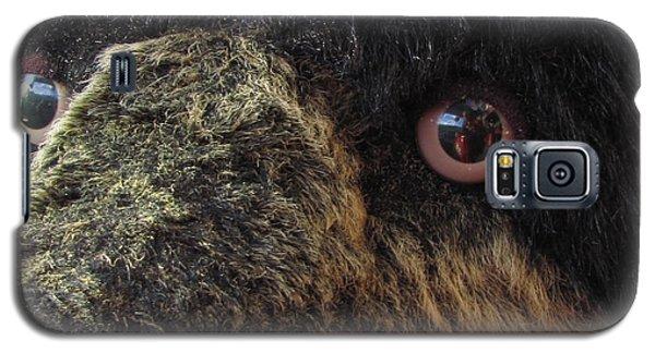 Galaxy S5 Case featuring the photograph Alaskan Bear by Jennifer Wheatley Wolf