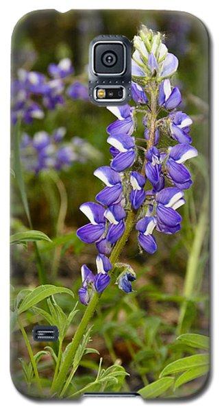 Alaskan Lupine In Denali Park Galaxy S5 Case