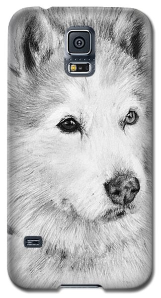 Alaskan Malamute Drawing Mardi Galaxy S5 Case
