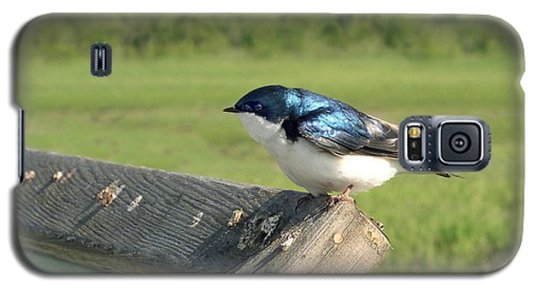 Galaxy S5 Case featuring the photograph Alaskan Swallow by Dan Redmon