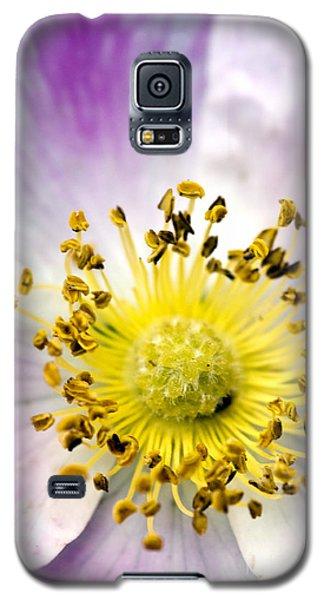 Alberta Wild Rose Galaxy S5 Case by Dee Cresswell