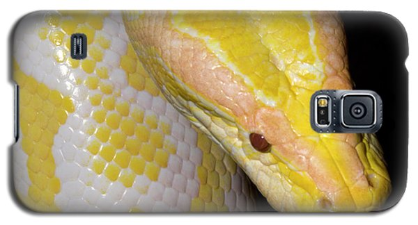 Albino Burmese Python Galaxy S5 Case by Nigel Downer