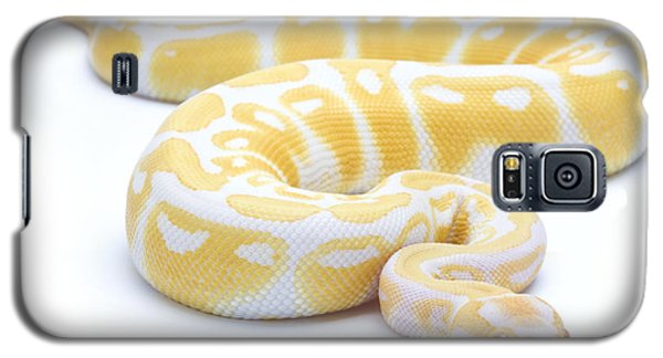 Albino Royal Python Galaxy S5 Case by Michel Gunther