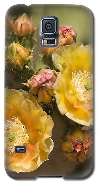 'albispina' Cactus Blooms Galaxy S5 Case