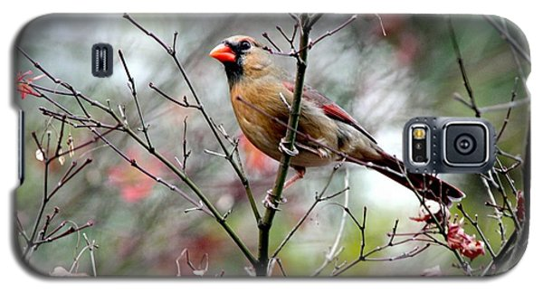 Alert - Northern Cardinal Galaxy S5 Case