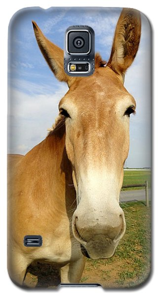 Alert And Ready To Work Galaxy S5 Case by Mary Beth Landis