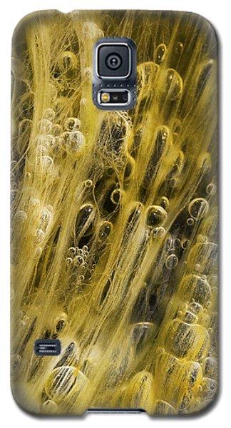 Algae Bubbles In Creek Galaxy S5 Case