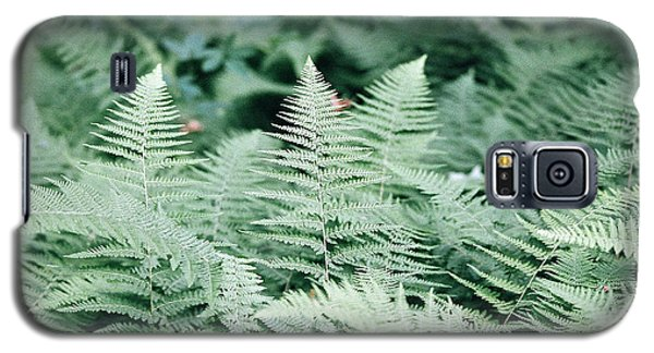 Galaxy S5 Case featuring the photograph Algonquin Ferns by David Porteus
