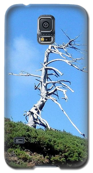Galaxy S5 Case featuring the photograph Alien Tree by AJ  Schibig