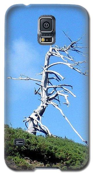 Alien Tree Galaxy S5 Case by AJ  Schibig