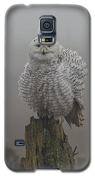 All Fluffed Up Galaxy S5 Case