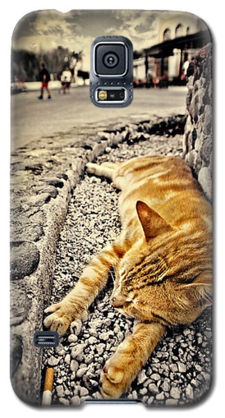 Galaxy S5 Case featuring the photograph Alley Cat Siesta In Grunge by Meirion Matthias