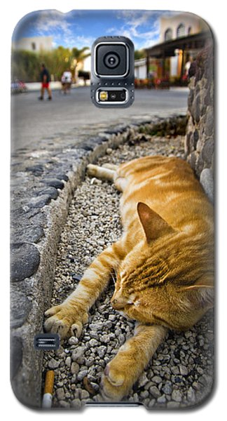 Galaxy S5 Case featuring the photograph Alley Cat Siesta by Meirion Matthias