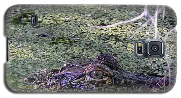 Galaxy S5 Case featuring the photograph Alligator 019 by Chris Mercer