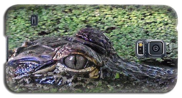 Alligator 027 Galaxy S5 Case by Chris Mercer
