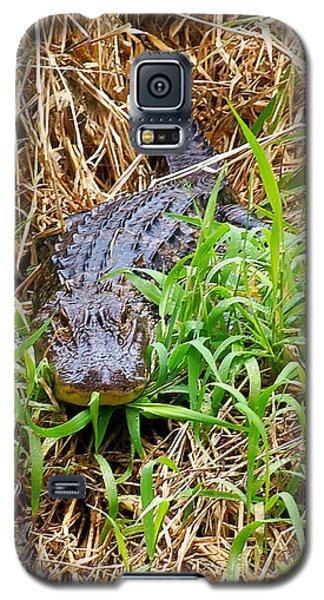 Alligator Galaxy S5 Case by Chris Mercer