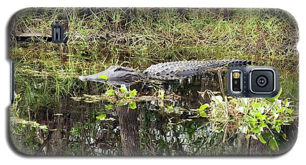 Alligator In Swamp Galaxy S5 Case by Jim West