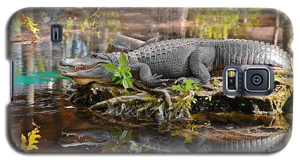 Alligator Mississippiensis Galaxy S5 Case by Christine Till
