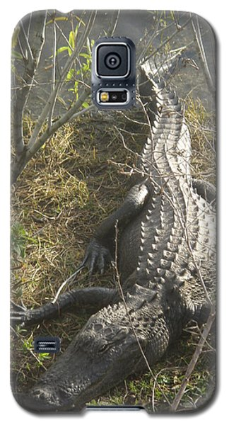 Galaxy S5 Case featuring the photograph Alligator by Robert Nickologianis