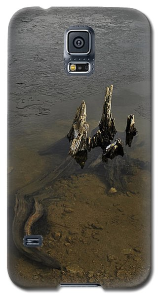 Alligator Stump Galaxy S5 Case