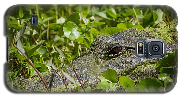 Galaxy S5 Case featuring the photograph Alligator Taken At Brazos Bend by Zoe Ferrie