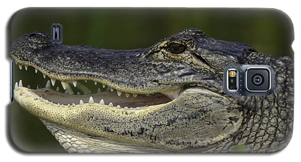 Alligator With Mouth Open Galaxy S5 Case
