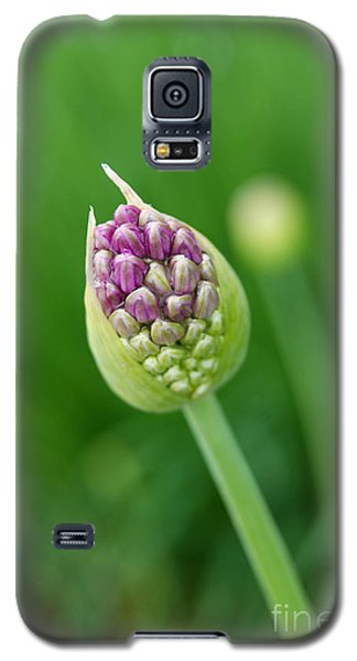 Galaxy S5 Case featuring the photograph Allium Flower by Eva Kaufman