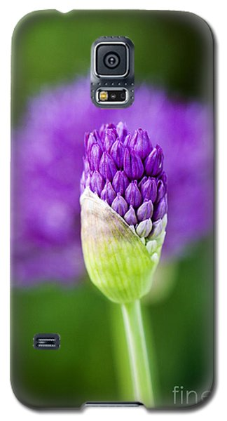 Allium Hollandicum Purple Sensation Galaxy S5 Case by Tim Gainey