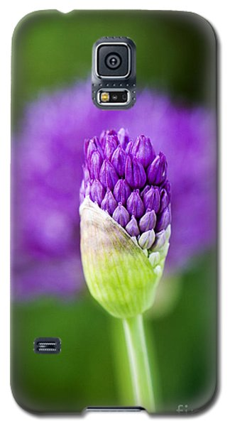Allium Hollandicum Purple Sensation Galaxy S5 Case