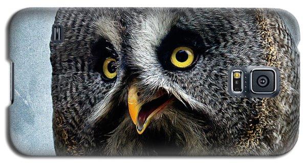 Allocco Della Lapponia - Tawny Owl Of Lapland Galaxy S5 Case