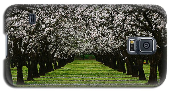 Almond Orchard Galaxy S5 Case