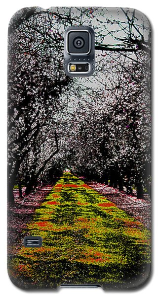 Almond Trees In Bloom Galaxy S5 Case