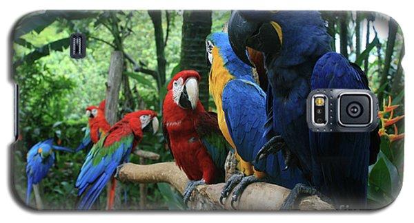 Macaw Galaxy S5 Case - Aloha Kaua Aloha Mai No Aloha Aku Beautiful Macaw by Sharon Mau