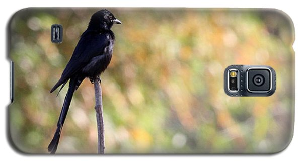 Galaxy S5 Case featuring the photograph Alone - Black Drongo  by Ramabhadran Thirupattur
