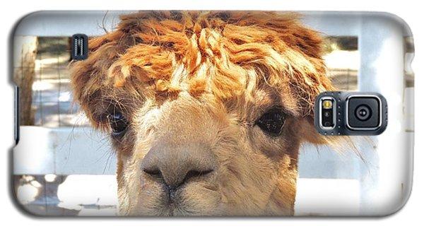 Alpaca Bed Head Galaxy S5 Case