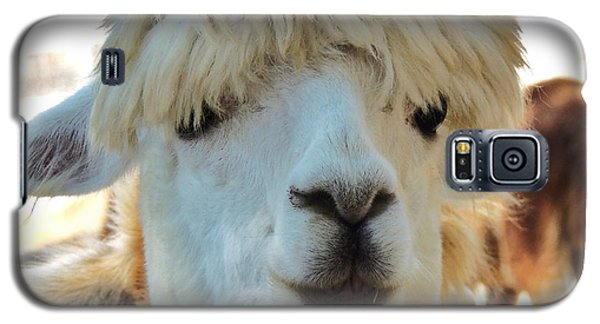 Alpaca Hair Do Galaxy S5 Case
