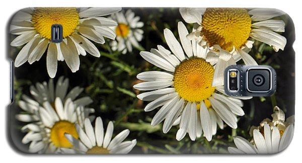 Alpine Daisies In Glacier National Park Galaxy S5 Case