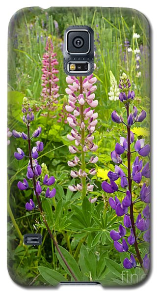 Galaxy S5 Case featuring the photograph Alpine Lupines by Maria Janicki