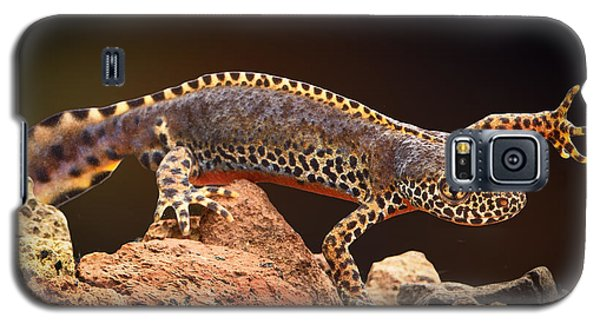 Alpine Newt Galaxy S5 Case by Dirk Ercken