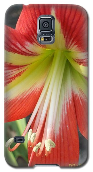 Amarylis Full Bloom Galaxy S5 Case by Belinda Lee